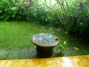 The lotus pond planter overflows