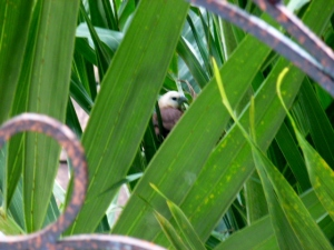 Sitting in her nest